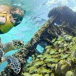 坎昆珊瑚礁和沉船浮潜之旅