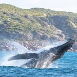 Jet Boat Whale Watching Safari from Dunsborough