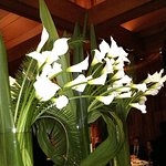 Flowers behind our table......