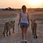 Walk with Lions - Zimbabwe