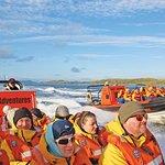 穿越科里弗雷坎灣的海洋野生動物之旅