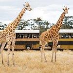 웨 리비 오픈 레인지 동물원 일반 입시