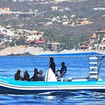 Zodiac Whale Watching Adventure Tour in Cabo San Lucas