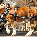 Charleston's Historic Residential Carriage Tour