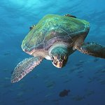 5 Day Scuba Dive Package with Aquanauts Grenada