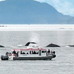 Private Small Group Whales and Wilderness Exploration