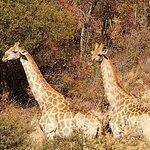 Pillanesburg National Park 2 Days 1 night Magical Safari