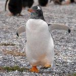 Canal de Beagle et promenade avec des pingouins (hiver)