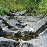 Wandelen door de spectaculaire Bjurälven-vallei