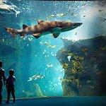 Aquarium La Rochelle入場券オーディオガイド付き