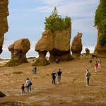Hopewell Rocks Admission