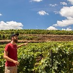 Complete Douro Valley Wine Tour with Lunch, Wine Tastings and River Cruise
