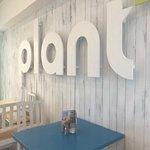 Plant Foto
