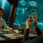 16-метровый аквариум