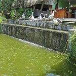 Warung Tepi Tebing照片