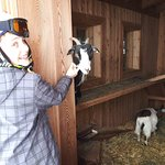 Bij de stal met geiten en konijnen
