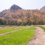 ภาพถ่ายของ เดอะ วิลเลจ ฟาร์ม ทู คาเฟ่
