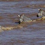 Safari to Mara River
