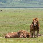 Tanzania safari (4-day)