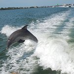 2 Hour Dolphin Tour