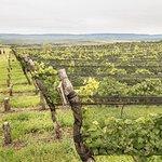 Wine Tour Privado - Calamuchita