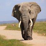 Into Adventure Safaris