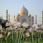 One Day Taj Mahal & Agra Tour From Delhi By Express Train( Shatabdi Exp )