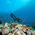 Bohol Scuba Diving Experience