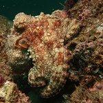 Scuba Diving Tour - Majahuitas