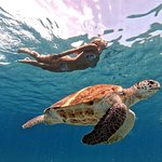 Swimming with sea turtles incl. professional pictures