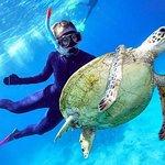 Great Barrier Reef Day Cruise fra Cairns, herunder Snorkeling og Marine Biologist Præsentation