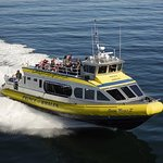 Half-Day Whale Watching Adventure from Telegraph Cove