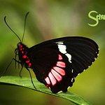 Hanging Bridges -Butterflies & Hummingbirds From Monteverde