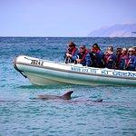 Kangaroo Island 75-Minute Ocean Safari