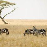3Days Serengeti Safari