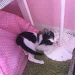 Фотография Neko Cat Cafe Phuket