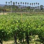 Фотография Edgecombe Brothers Winery