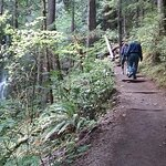 Olympic National Park and Hoh Rain Forest Overnight Tour