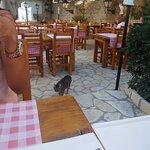 Photo of Restaurant Ana