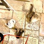 תמונה של Fat Cats Dubrovnik