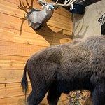 Фотография The Buffalo Bar