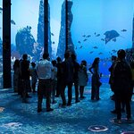Oceanographic Museum of Monaco and Aquarium Admission Ticket