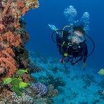 Cabo San Lucas Beginner Scuba Diving Experience