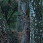 Foto de Parc Naturel de Chambaran