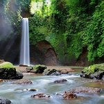 Full-Day Private Nature and Cultural Tour in Bali