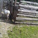 Photo of Koliba U Dobreho Pastiera