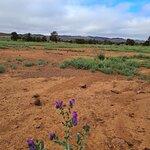 Bendleby Ranges照片
