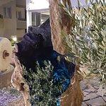 Valokuva: The Olive Tree