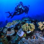 Intro diving Hurghada  Egypt