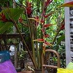 ภาพถ่ายของ บ้านต้นไม้ คาเฟ่